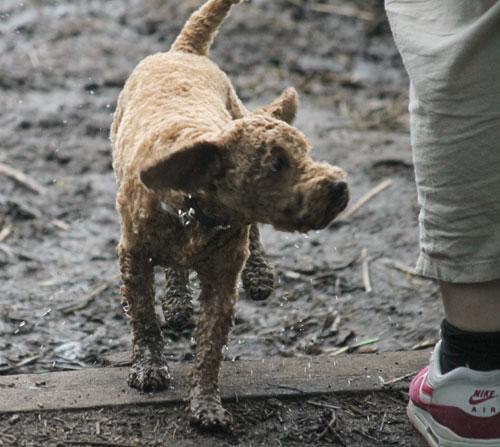 muddyemma